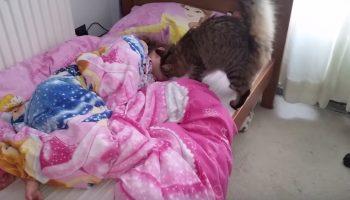 По утрам котик приходит будить свою подружку в школу. Лучше всякого будильника!