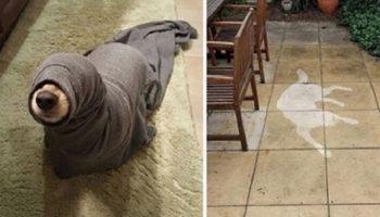 Самые странные ситуаций, которыми собаки точно не будут гордиться