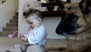 Малышка отобрала косточку у собаки – реакция собаки просто поражает