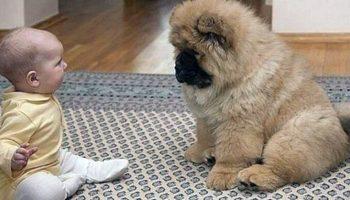 Невропатолог прописал парализованному малышу собачку чау-чау