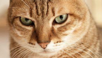 «Катя, что-то с нашим котом! Он ходить не может!»