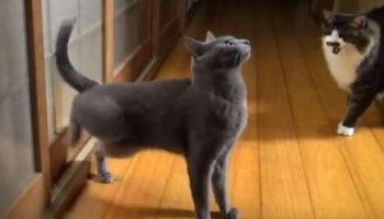 Хитрый и коварный кот придумал оригинальный способ будить хозяев по утрам