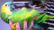 Попугай, который любит поболтать, чуть не довел свекровь до инфаркта