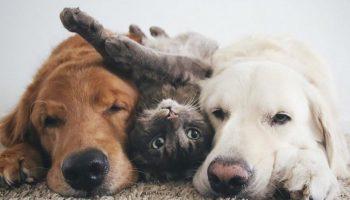 Эти две собаки и кот живут вместе как одна семья