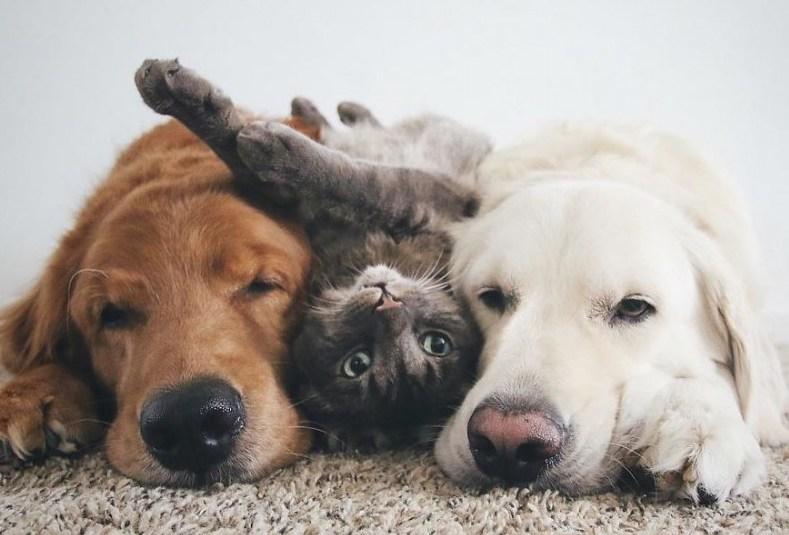 того, коты и собаки вместе фото экране отобразится