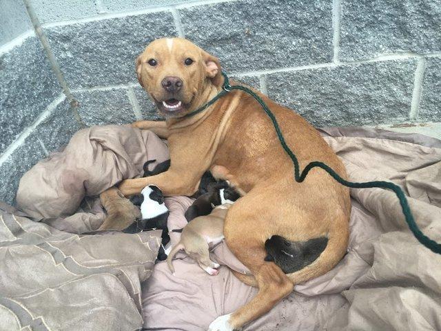 Собака не бросила щенков, даже когда люди их оставили на улице