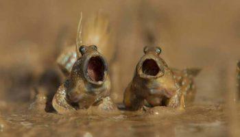 Фотографии-финалисты конкурса на лучшую комедийную фотографию забавных животных