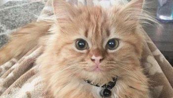Её называют «кошачьей Моной Лизой» из-за ее загадочной улыбки