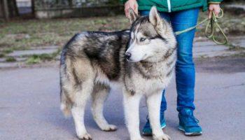 Умнейшая Собака удивительной красоты сама пришла проситься в приют