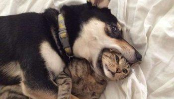 Несколько фотографий кошек и собак, от которых на душе становится приятнее