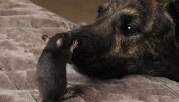 Собака-спасатель страдала от дурного настроения, пока не нашла нового друга
