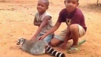 Эти малыши играли с лемуром. Гладили его! Теперь внимание на 0:13!