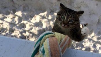 Когда этот милый кот возвращается домой, соседи падают со смеху