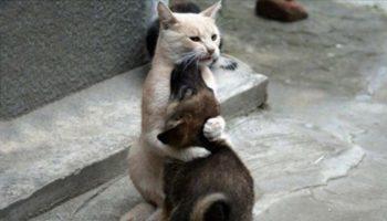 Забавный Кот по прозвищу «Папа Тереза»…
