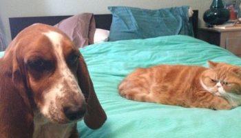Несколько причин любить милых котиков – даже когда они настоящие засранцы