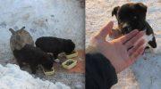 Кролик взял под защиту 3 маленьких щенков. Ушастый «отец» согревал их и кормил