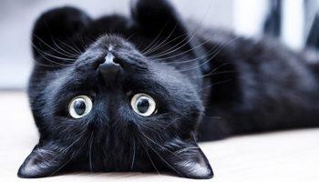 Прекрасный рассказ: «Вставная челюсть кота Маркиза»