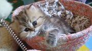 Мимишный котенок проснулся и хочет поиграть. Он очаровал весь Интернет!