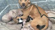 Собака не бросила своих малышей, когда хозяева выбросили их из дома