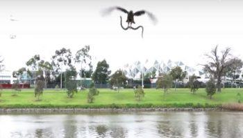 В Австралии ястреб скинул живую змею на семью отдыхающих, которые жарили мясо