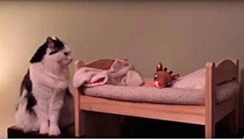У этой кошечки есть своя маленькая и аккуратненькая кроватка