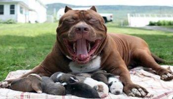 Собака не бросила щенков, даже когда люди их выбросили на улицу