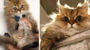 Доказательство, что котики растут ну очень очень очень быстро…