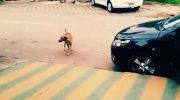 Пес шел по улице, как вдруг в машине зазвучала музыка. Все внимание на реакцию собаки!