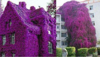 Красивые, изысканные и прекрасные дома, которые просто утопают в море цветов