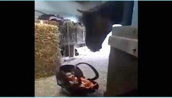 Маленькую крошку оставили под присмотром лошади. Как она себя повела?
