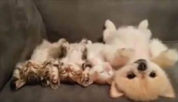 На это можно смотреть часами: Щенок старается не разбудить котят