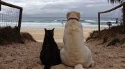 Эти коты по уши втрескались в прекрасных собак!
