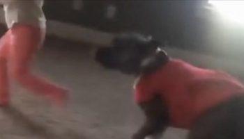 Собака видит, как девочка делает упражнение «Колесо» — Его реакция вызвала хохот всей семьи!