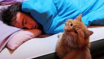 Каждое утро в 05:00 котик будил своего хозяина необычным способом