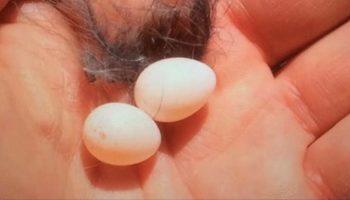 Мужчина нашел во дворе два маленьких яйца и решил дать птенцам шанс на новую жизнь