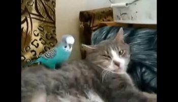 Удивительно забавное видео! Попугай разговаривает с котиком