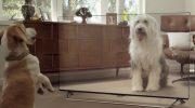 Реакция домашних любимцев на новый телевизор