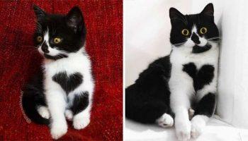 Котята, которые с возрастом превратились в шикарных котов и кошек
