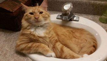 Милейшие вещи в котах, которые мы находим притягательными