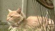 Хитрая кошка украла у песика новорожденных щенков
