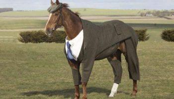 Для лошадки сшили по специальному заказ костюм-тройку! Конь в пальто отдыхает!