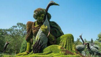 В руках этих садовников деревья и кустарники превращаются в настоящую сказу