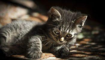 Маленький котик лежал в луже бензина на заправке и тихонько умирал…