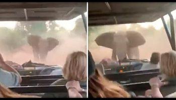 Веселые Туристки ехали по пустыни, как вдруг на дорогу вышел злой и взбешенный слон