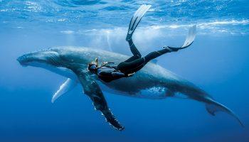 Девушку-дайвера не отпускал на поверхность воды кит, она не сразу смогла понять в чем дело