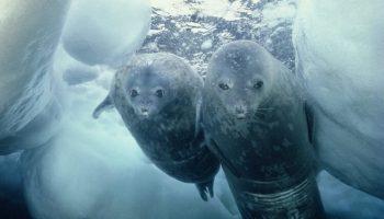 10 нереальных крутых фактов о холодной Антарктиде