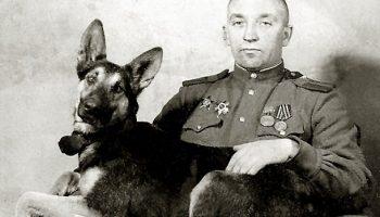 «Джульбарс» — пес, которого на Параде Победы несли на руках