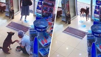Милое видео о том, как мудрый пес пришел в аптеку за помощью