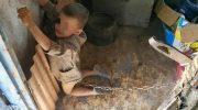 Какой ужас — как к собаке отнеслись: родители посадили ребенка на цепь