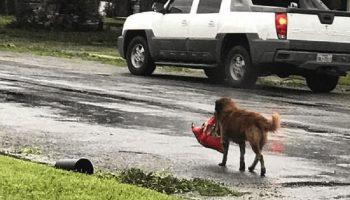 Собака упорно тащила пакет и тем самым спасла малыша